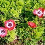 outer-banks-florist-field